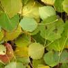 Осенние поделки из листьев, шишек и желудей
