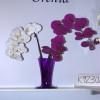 ЦветыЭкспо-2011, Flowers Expo – 2011 – фотоотчет с выставки
