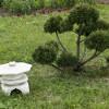 Как создать японский сад на дачном участке