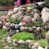 Каменистые сады — типы и назначение