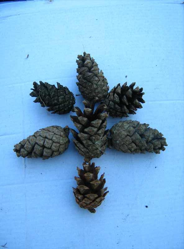 Поделки из шишек и листьев 90