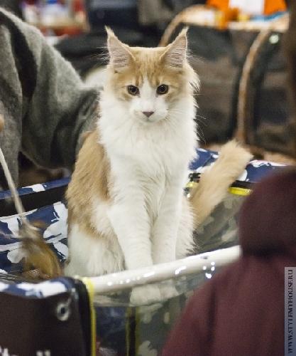 Международная выставка кошек — ГРАН-ПРИ ROYAL CANIN